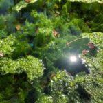 虫よけスプレーの季節到来!作り方と注意そして使い方