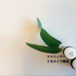 炎症と予防医学とアロマテラピー