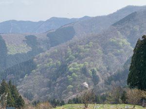 ネットショップにて伊吹山の麓栽培の薬草茶のお取り扱い始めました!